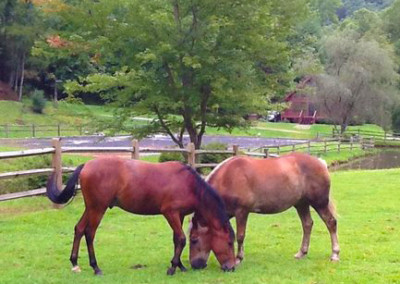 falling water farm vacation rental horses grazing